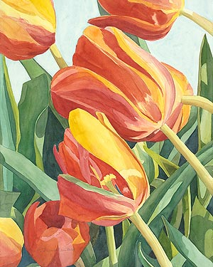 Tulips - watercolor painting by Pamela Alderman